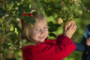 Apple Valley Orchard
